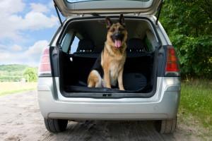 Den Hund anschnallen? Es gibt entsprechende Gurte oder ähnliches, um das Haustier im KFZ zu sichern.