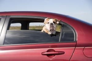 Es gibt einige Möglichkeiten wie Sie Ihrem Hund im Auto das Leben erleichtern können.