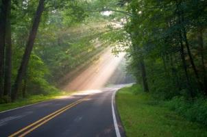 Ein Wildunfall mit dem Motorrad oder mit dem Auto ist auf Landstraßen keine Seltenheit.